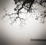 The misty branch...