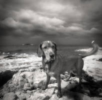 Dog and sea... by denis2