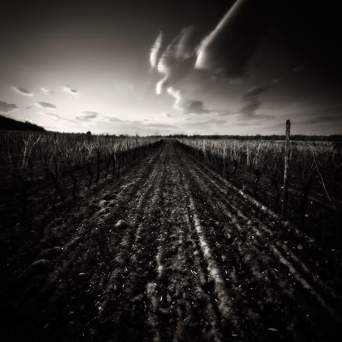 Winter vineyard... by denis2