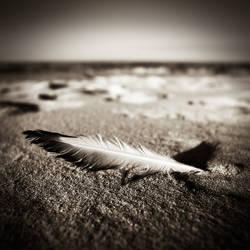 Omaha beach...III