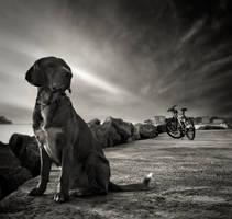 Dog and...