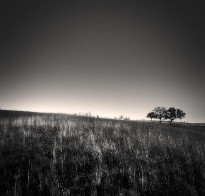 Three trees... by denis2