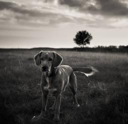 Dog,tree,sky... by denis2