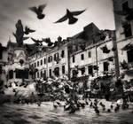 Birds...II by denis2