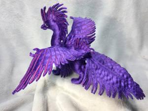 Draco splendens, in purple
