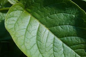 Leaf again by TomRolfe