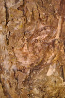 rough bark texture 2 by TomRolfe