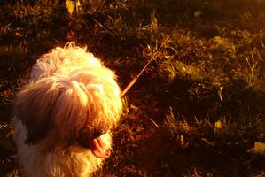 My dog Lola by TomRolfe