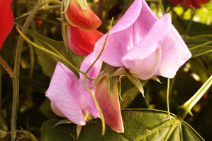 pink flower by TomRolfe