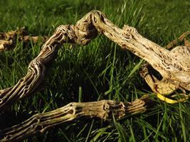 Dry twig by TomRolfe