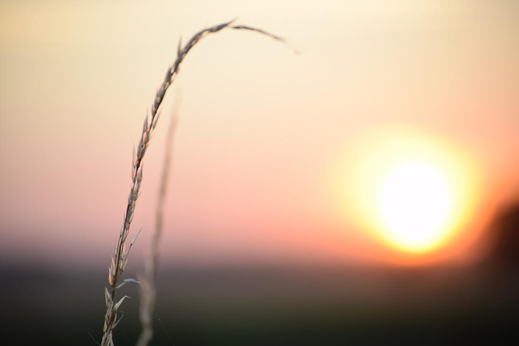 Countryside Sunset by TomRolfe