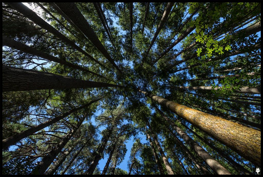 Ross Creek Trees by shadowfoxcreative