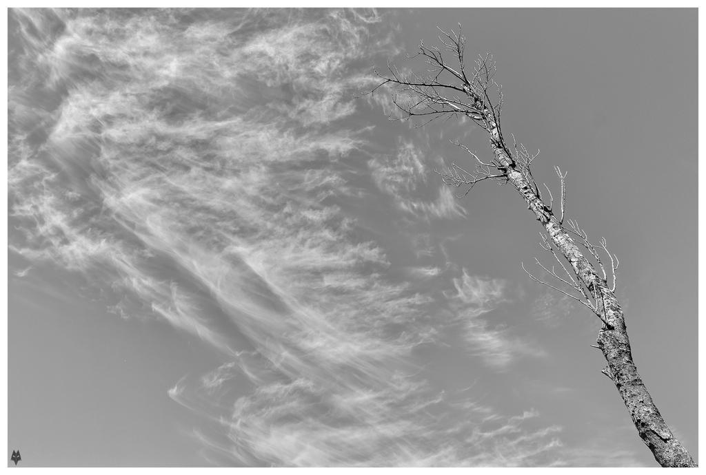Paint the sky by shadowfoxcreative