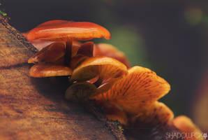 Fungi-2 by shadowfoxcreative
