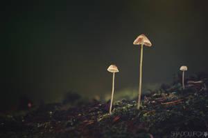 Fungi-10 by shadowfoxcreative
