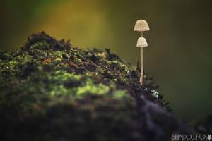 Fungi-11 by shadowfoxcreative
