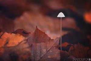 Fungi-14 by shadowfoxcreative