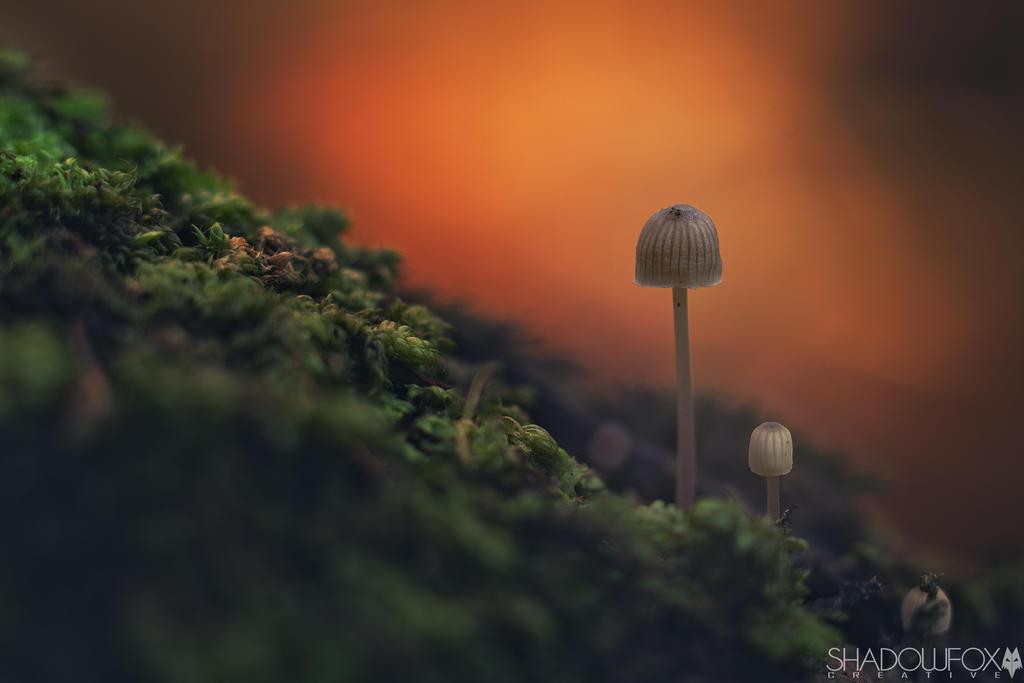 Fungi-15 by shadowfoxcreative
