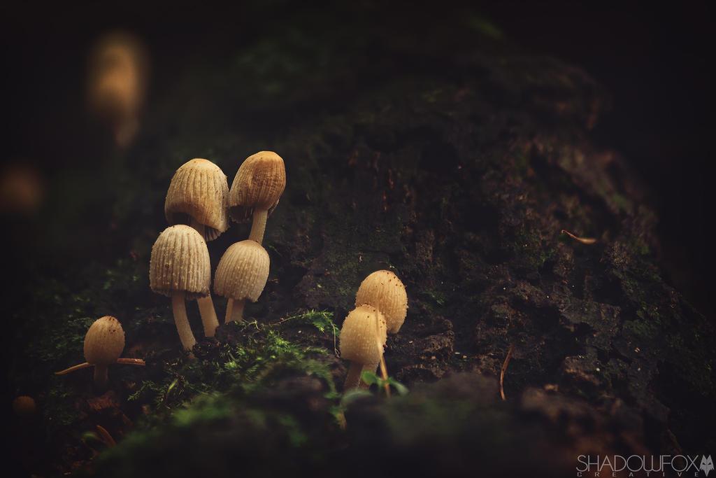 Fungi-19 by shadowfoxcreative