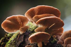 Fungi-20 by shadowfoxcreative