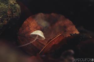 Fungi-24 by shadowfoxcreative
