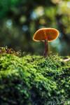 Fungi 2017-14