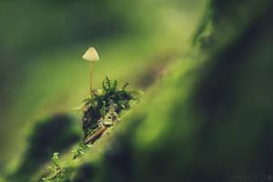Fungi-2018-5 by shadowfoxcreative