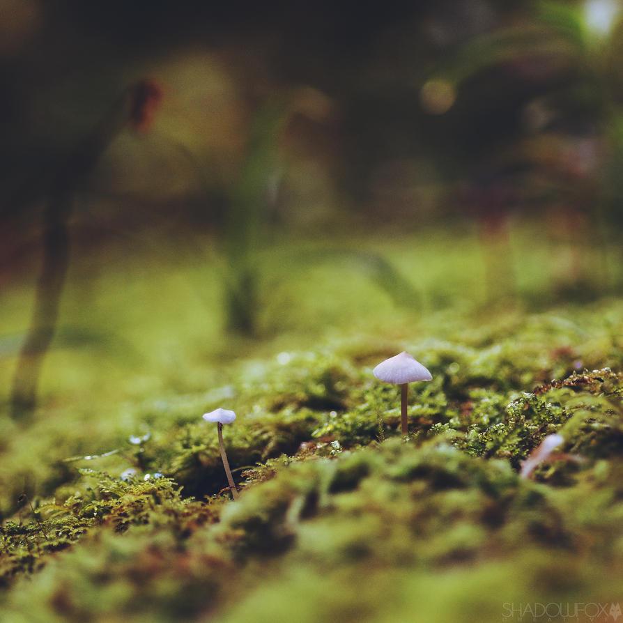 Fungi 2018-9 by shadowfoxcreative