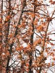 Autumn trees by shadowfoxcreative