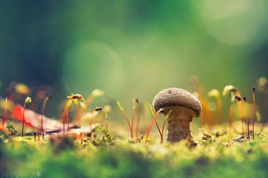 Fungi-2019--2