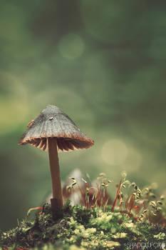 Fungi-2020-3