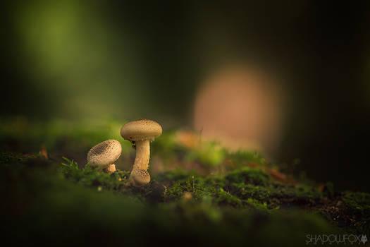 Fungi-2021--3