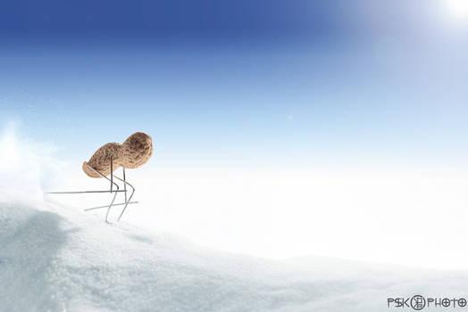 To Ski by PSK-Photo