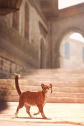 [DAZ3D] - Cat by PSK-Photo