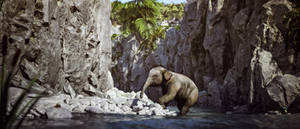 [DAZ3D] -  Little Elephant