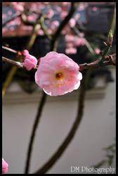 Portland Chinese Gardens V by davidmoakes