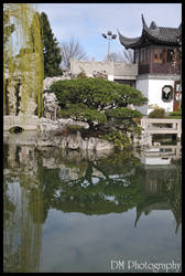 Portland Chinese Gardens X by davidmoakes