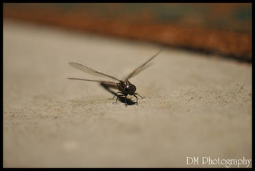 Porch Fly by davidmoakes