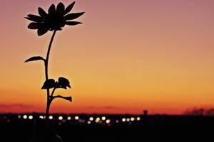 Autumn Silhouette by Identifyed-Khaos