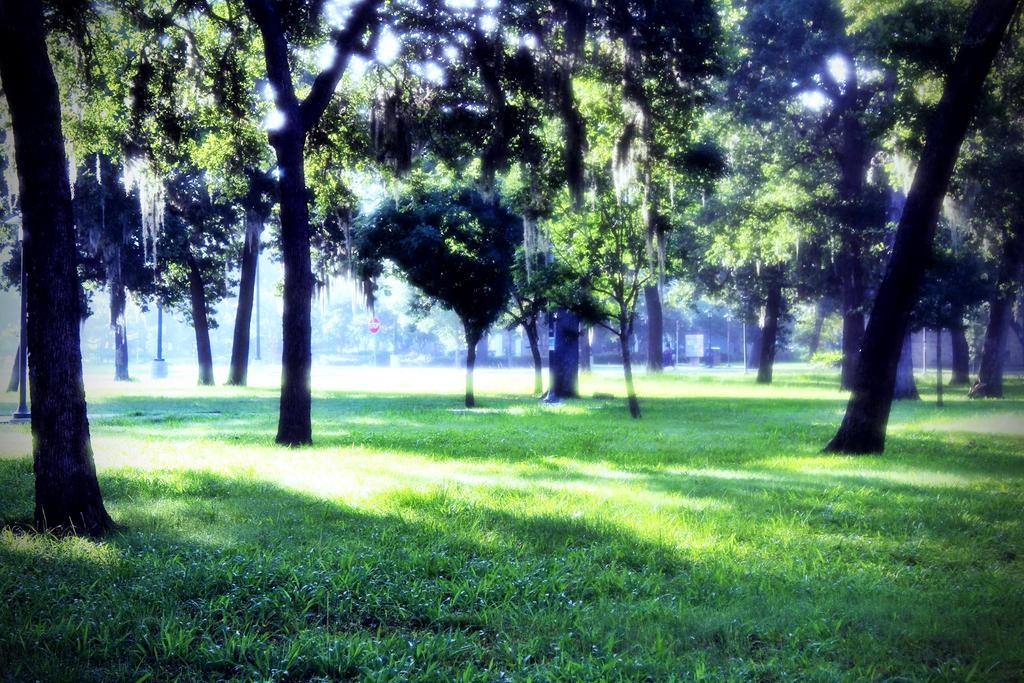 Misty Mornings by Identifyed-Khaos