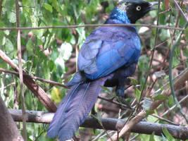 Blue bird by TreeshaP