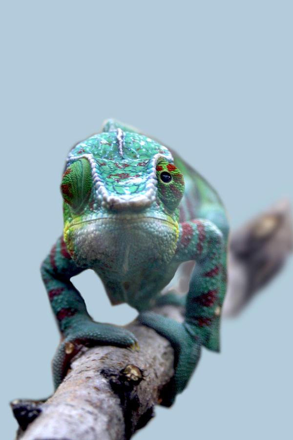 chameleon by RagazzaStupida