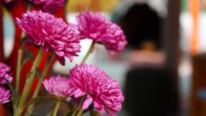 Flowers by amiyain