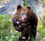Sweety Bear
