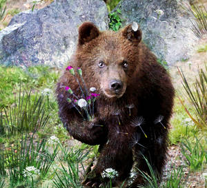 Sweety Bear  by LindArtz