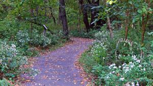 Nature Pathway