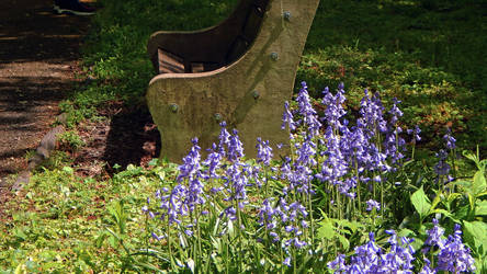 Bench with Bluebells