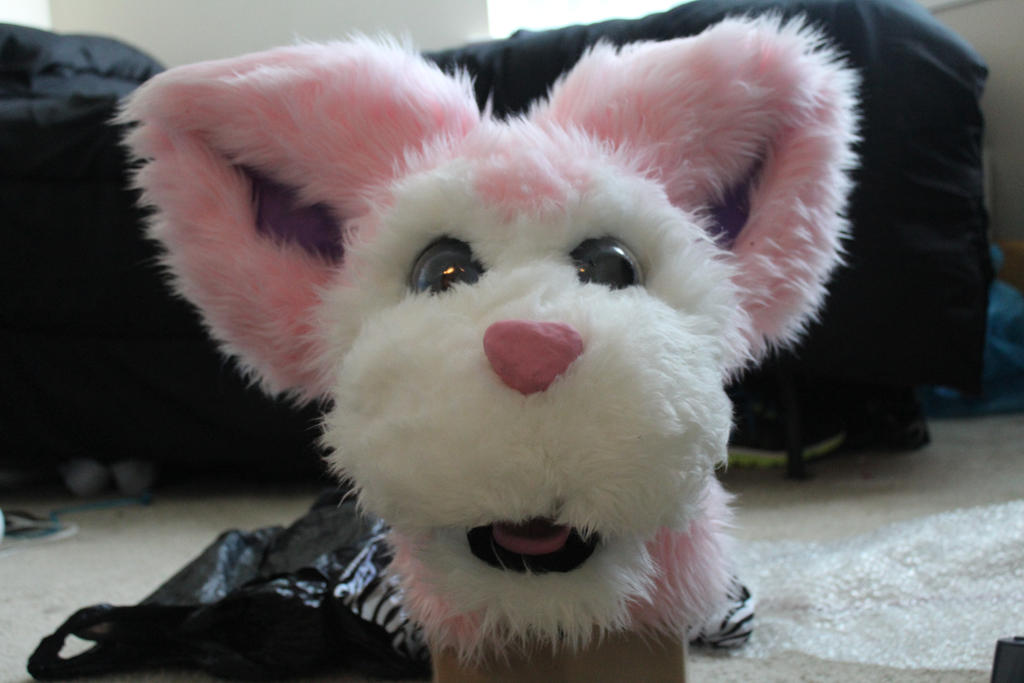 My First Fursuit Head Base Attempt Tooney Skitty By