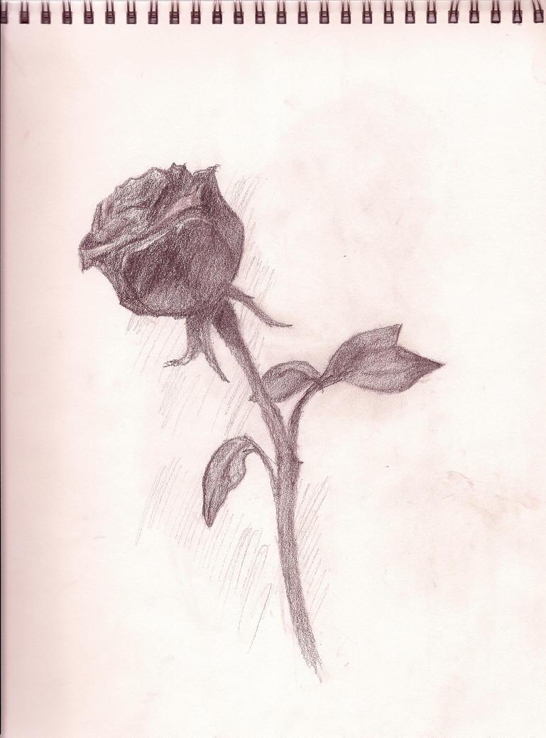 Rose by Septapphirix