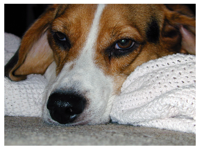 Buddy by SilverPixiGirl